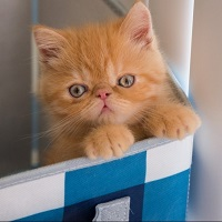 Kitten in a blue and white container