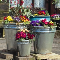 A selection of vividly coloured plants in pots of various sizes