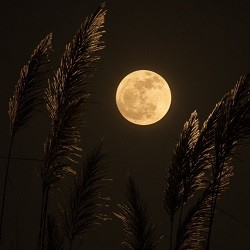 Moonlight can be used to cleanse and charge healing crystals